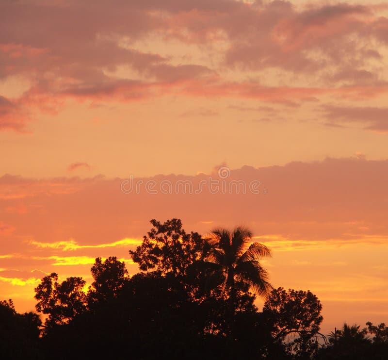 Download Por do sol tropical imagem de stock. Imagem de tropical - 535543