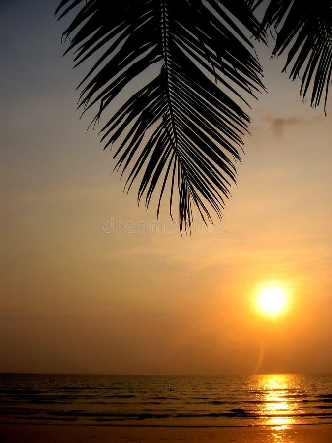 Download Por do sol tropical foto de stock. Imagem de verão, árvore - 541872