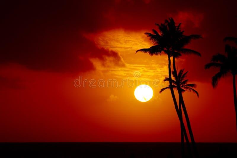Por do sol tropical imagem de stock royalty free