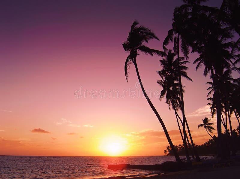 Por do sol tropical bonito fotografia de stock