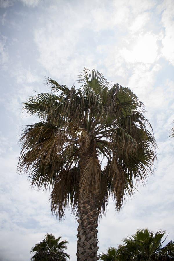 Por do sol tropical bonito com as palmeiras na praia fotografia de stock