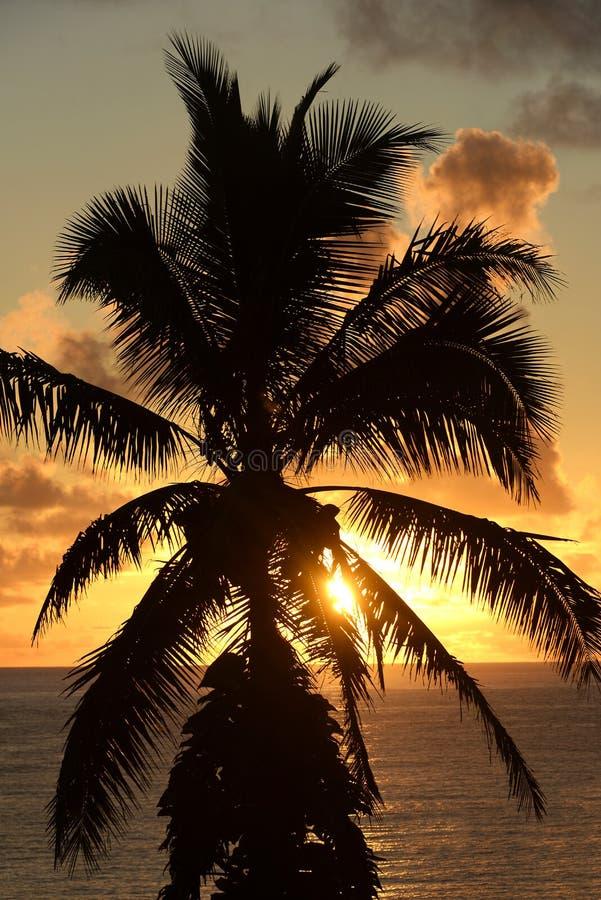 Por do sol tropical da palmeira, Maui, Havaí fotografia de stock royalty free