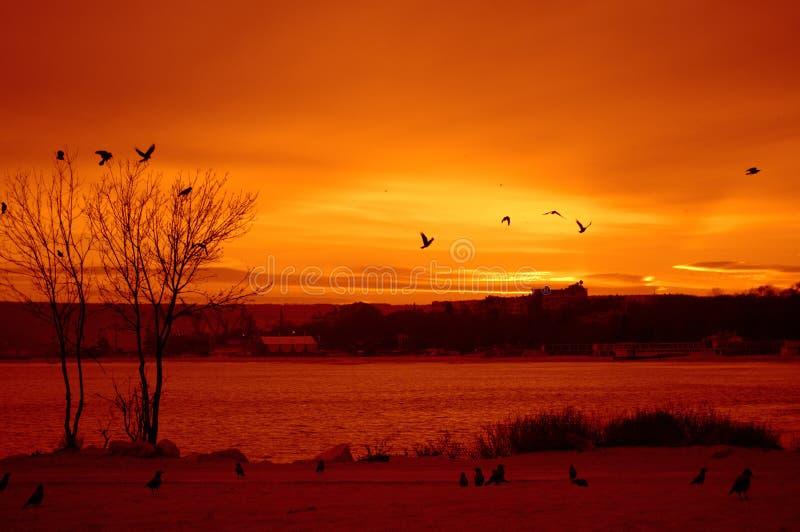 Por do sol vermelho do beira-mar imagem de stock royalty free