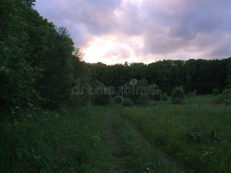 Download Por Do Sol Violeta Sobre A Floresta Imagem de Stock - Imagem de cavalo, campo: 107527299