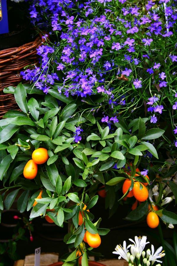 Por el florista foto de archivo libre de regalías