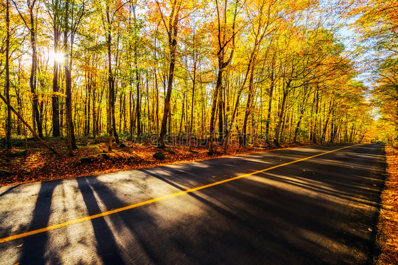 Por el Treed colorido Autumn Road foto de archivo