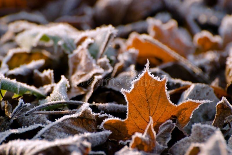 poranne światło słoneczne liści obrazy stock