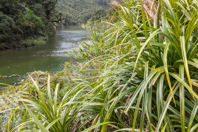 Porarari河,西海岸,新西兰 库存照片