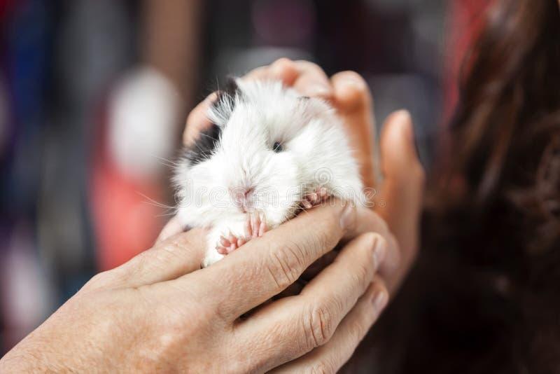 Porc de Holding Cute Guinea de client et de vendeur dans le magasin image stock