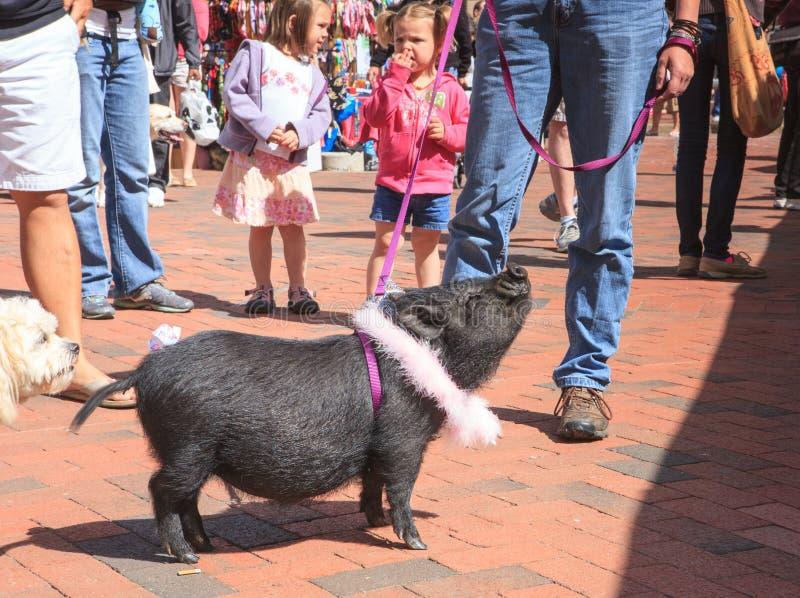 Porc gonflé par pot pour l'adoption photographie stock libre de droits
