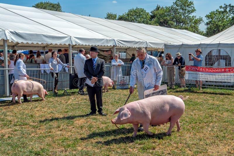 Porc jugeant à l'exposition de campagne de Hanbury, Worcestershire, Angleterre photo stock