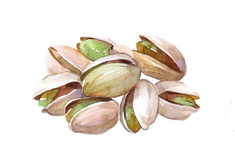 Porca do alimento do pistache da aquarela isolada ilustração do vetor