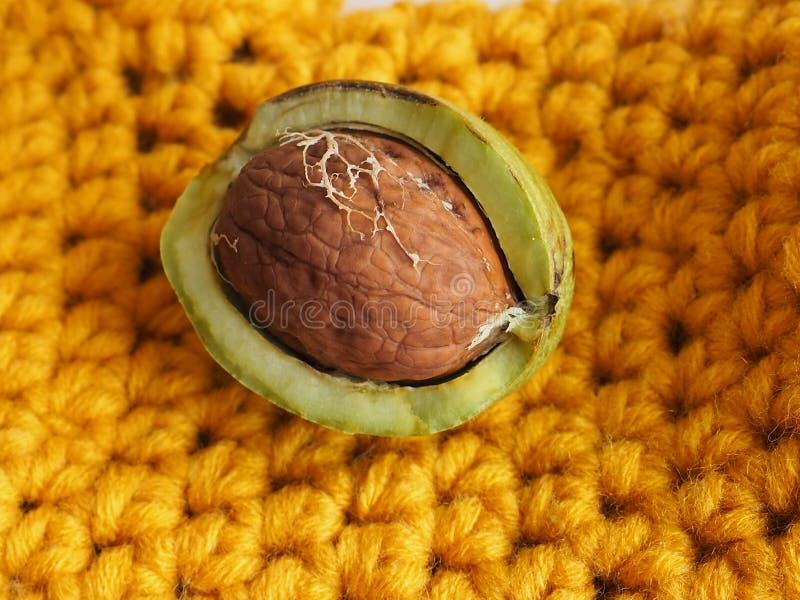 Porca madura com um shell verde aberto no fundo amarelo Uma noz clara de uma árvore de noz fotos de stock royalty free