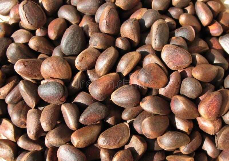 Porcas de pinho (sementes do pinho Siberian) fotografia de stock royalty free