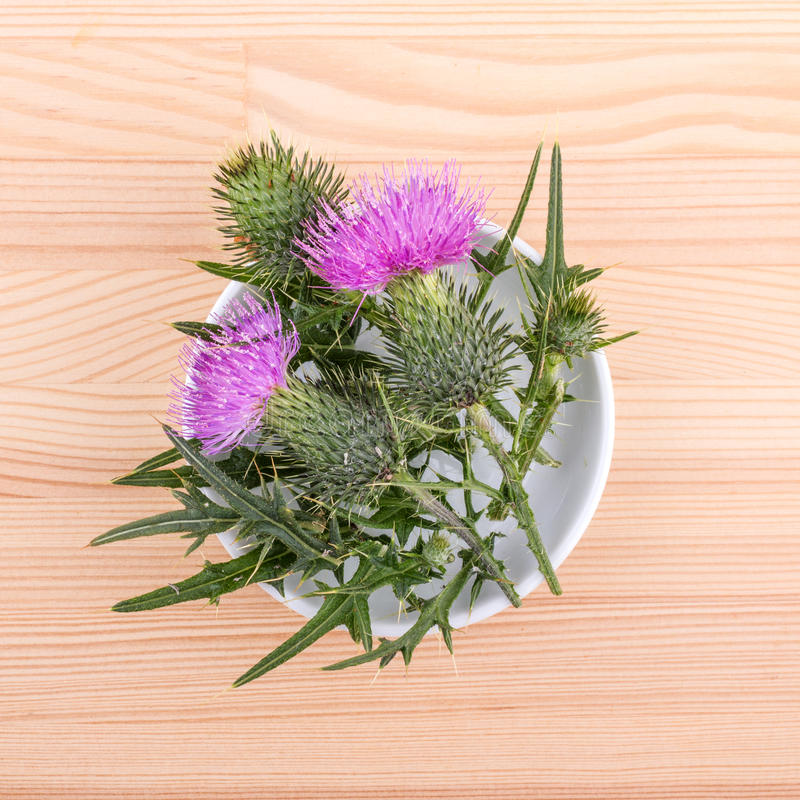Porcelain bowl with flowering Mary thistle royalty free stock photos