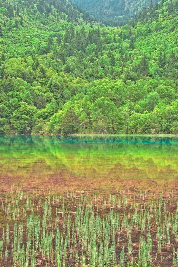 porcelanowy koloru pięć jiuzhaigou jezioro obrazy stock