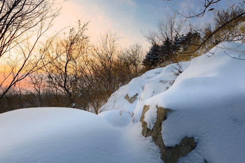 Po śniegu zdjęcia royalty free