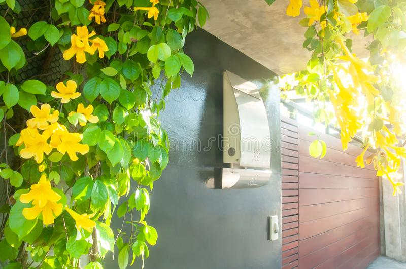 Porch and modern house facade with colorful Yellow bell are in bloom stock photos