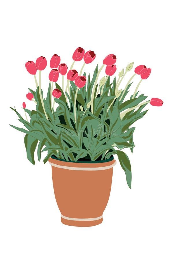 Porch Plant royalty free stock photo