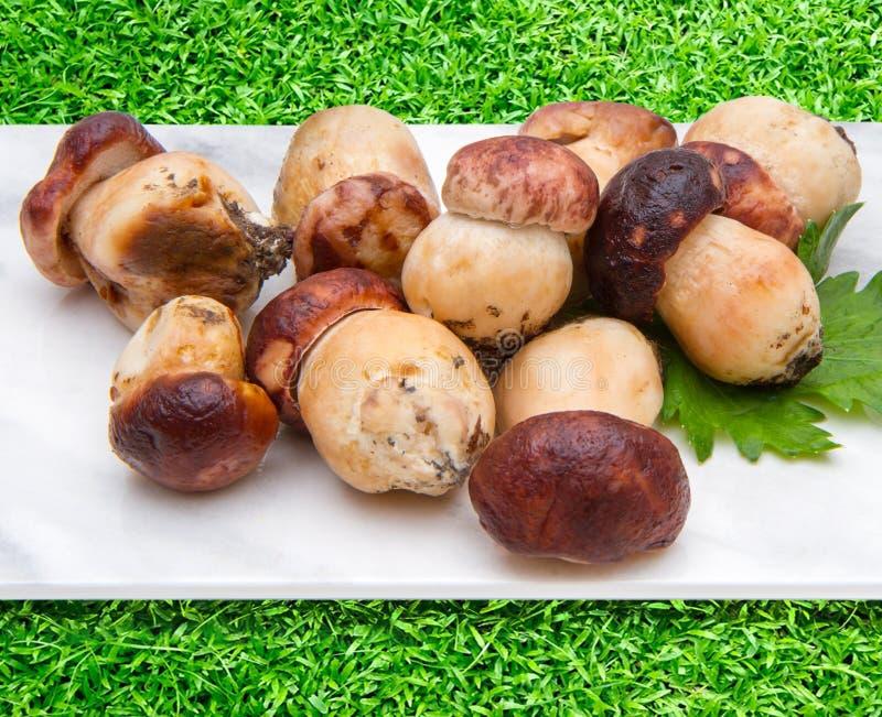 porcini在有绿色g的大理石砧板采蘑菇 免版税库存照片