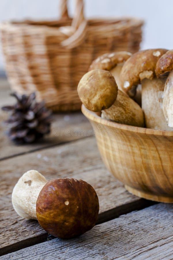 组porcini蘑菇 图库摄影