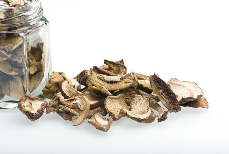porcini μανιταριών στοκ εικόνες