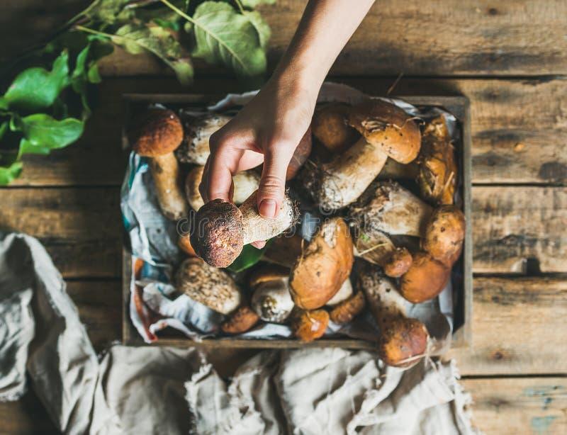 Porcini величает в деревянной руке ` s подноса и женщины держа гриб стоковое изображение