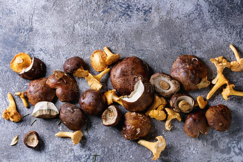Porcini boletus and chanterelles mushrooms. Heap of fresh forest porcini boletus and chanterelles mushrooms over gray texture background. Top view with space stock images