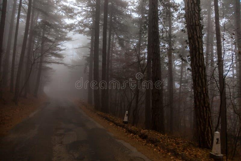 Porcini Fotografado na floresta em Sibéria ocidental foto de stock