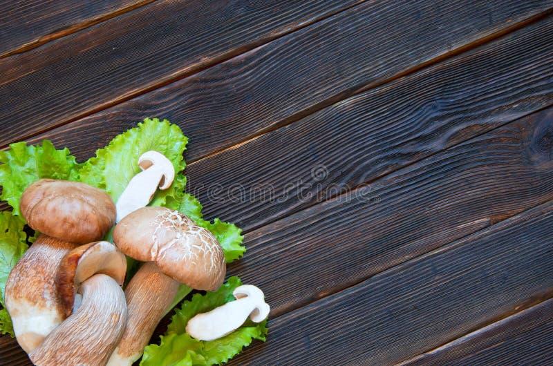 Porcini i sałatka na ciemnym drewnianym tle Rustick przełaz Jedzenie fotografia stock