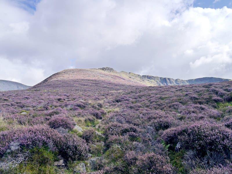 Porciones de brezo con las montañas en la parte posterior fotografía de archivo