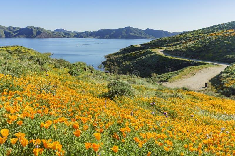 Porciones de flor de la flor salvaje en Diamond Valley Lake imagenes de archivo