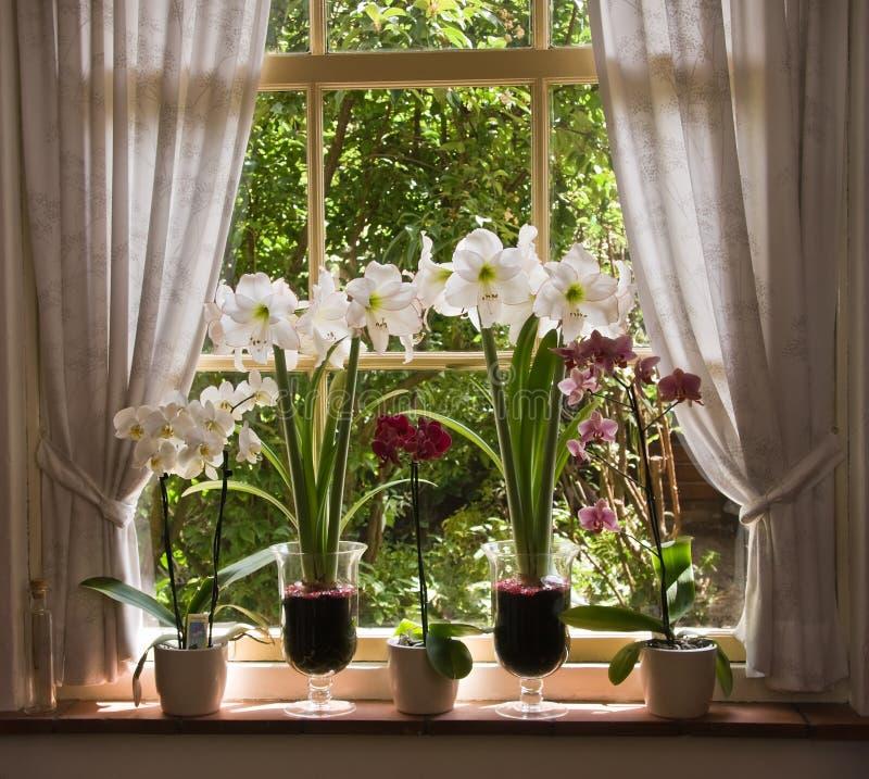 Porciones de flores en ventana vieja foto de archivo