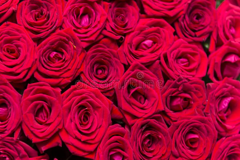 Porciones de las rosas frescas rojas, ramo de flores, pétalos rojos imágenes de archivo libres de regalías