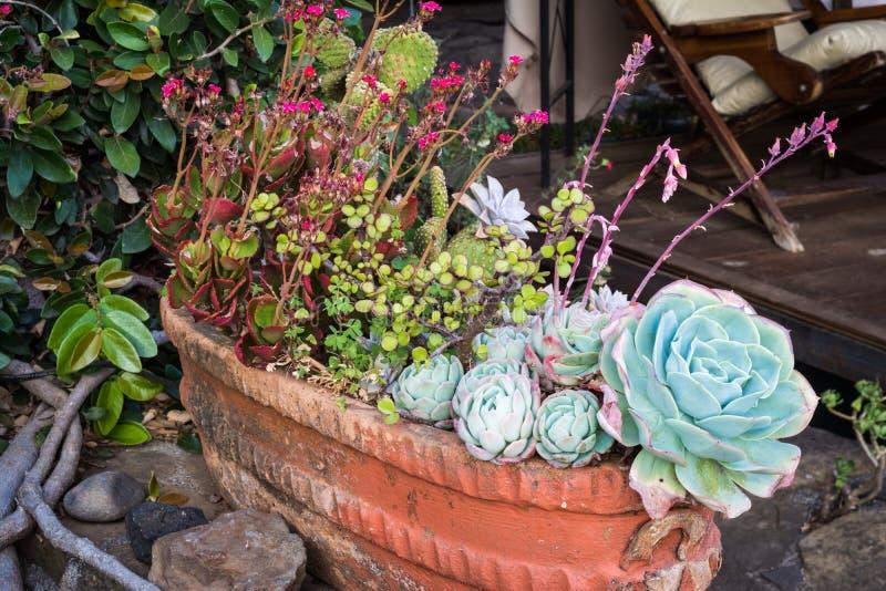 Porciones de Succulents en un pote fotos de archivo libres de regalías