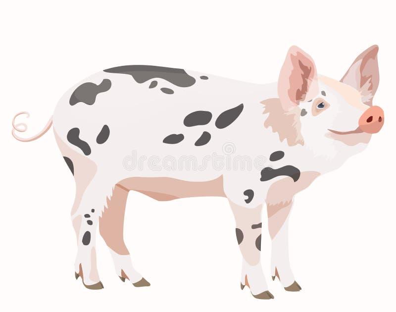 Porco bonito isolado no fundo branco ilustração stock