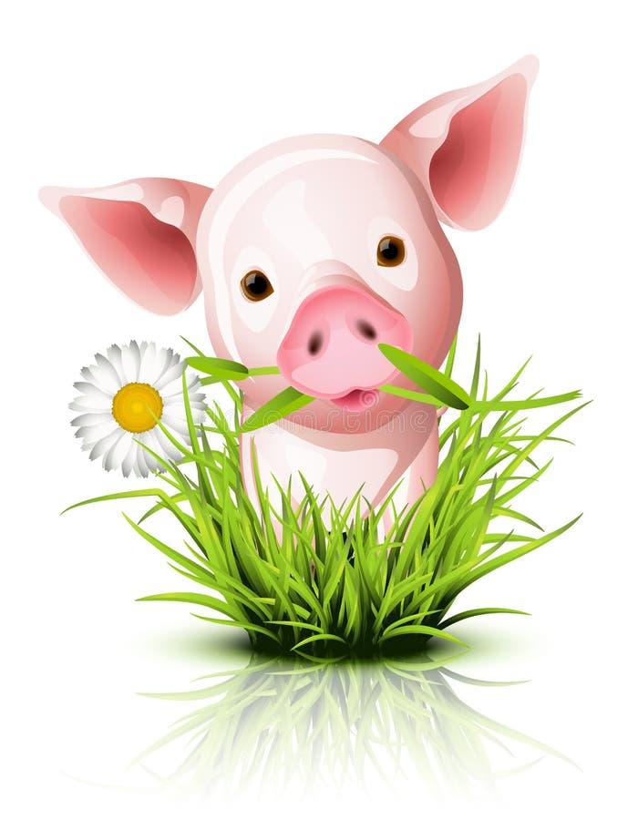 Porco cor-de-rosa pequeno na grama ilustração royalty free