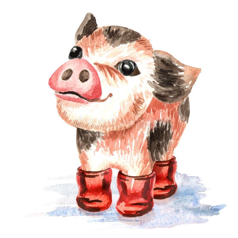 Porco da xícara de chá engraçada bonito de Autumn Little mini nas botas de borracha Ilustração tirada mão da aquarela, isolada no ilustração do vetor