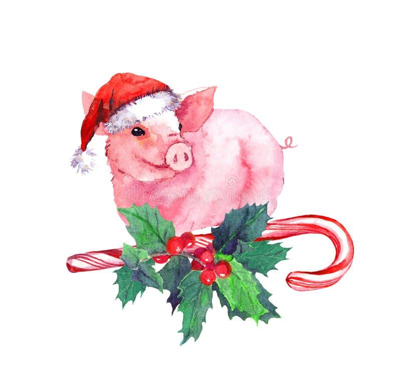 Porco doce no chapéu vermelho de Santa no bastão de doces, visco do xmas Aquarela para o Natal, ano novo 2019 ilustração stock