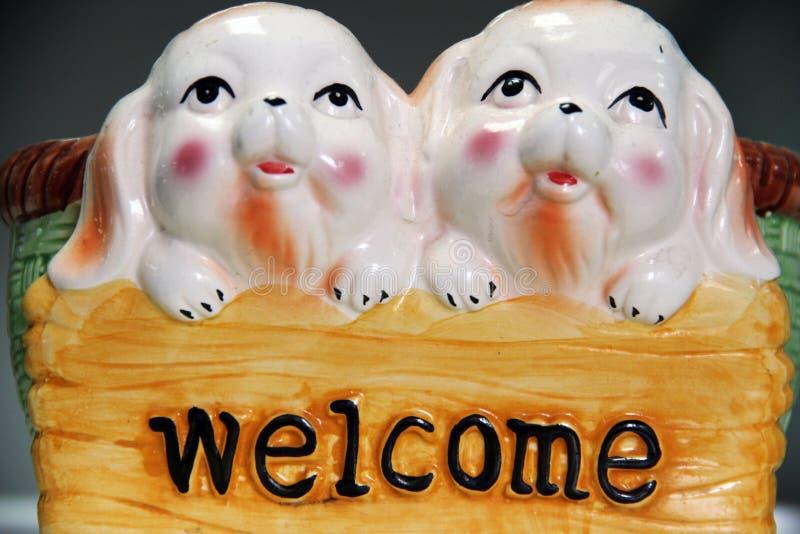 Porcos bem-vindos e bonitos imagem de stock royalty free