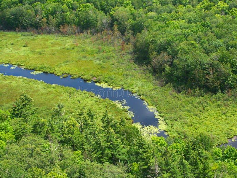 porcupine πάρκων βουνών κράτος στοκ εικόνες με δικαίωμα ελεύθερης χρήσης