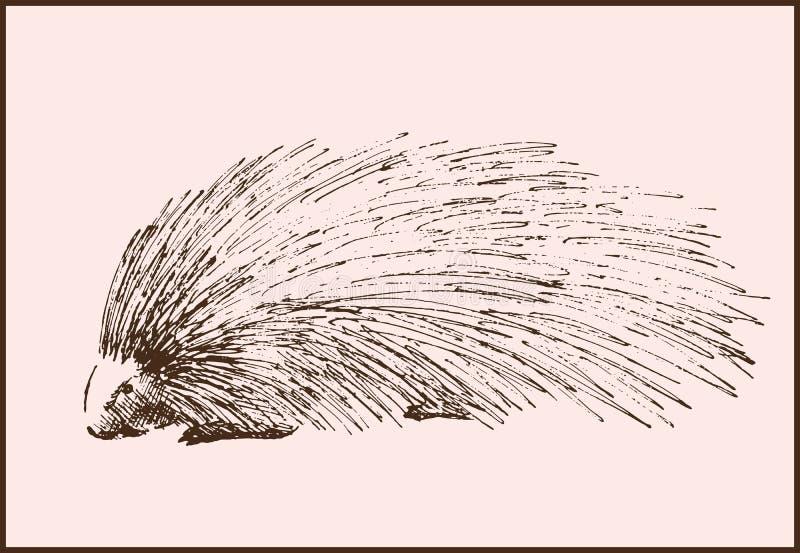 Download Porcupine ilustración del vector. Ilustración de porcupine - 42438183