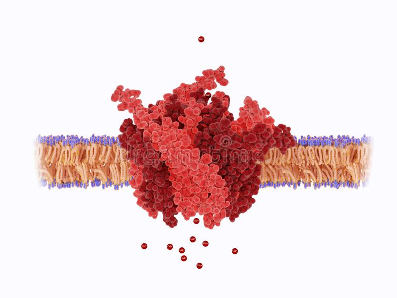 Pore of the calcium released-activated calcium CRAC channel. The calcium channel is composed of a hexameric assembly or Orai subunits around a central ion pore vector illustration