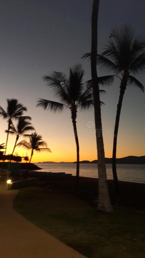 Pores do sol das palmeiras n foto de stock royalty free