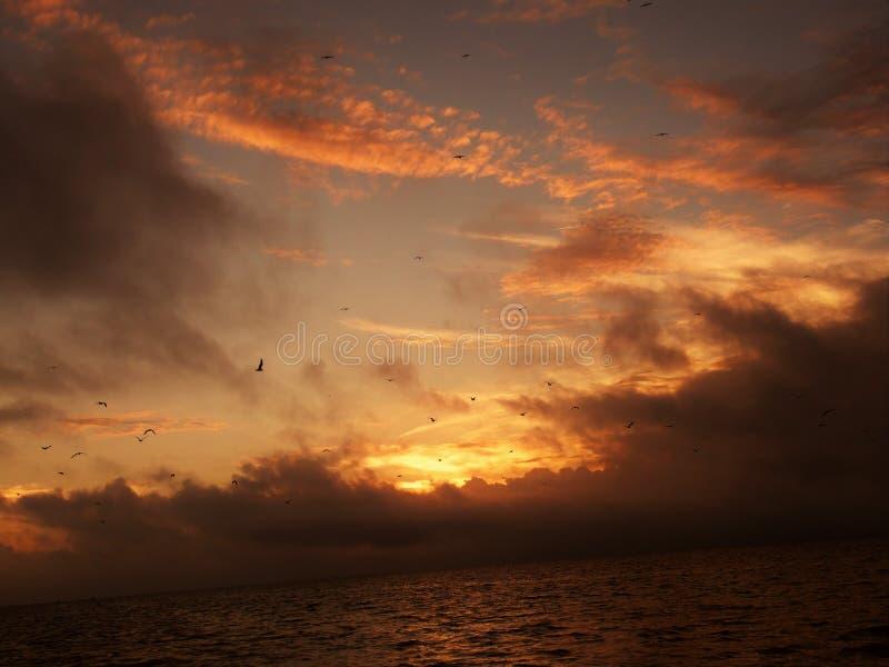 Pores do sol de Florida imagens de stock royalty free