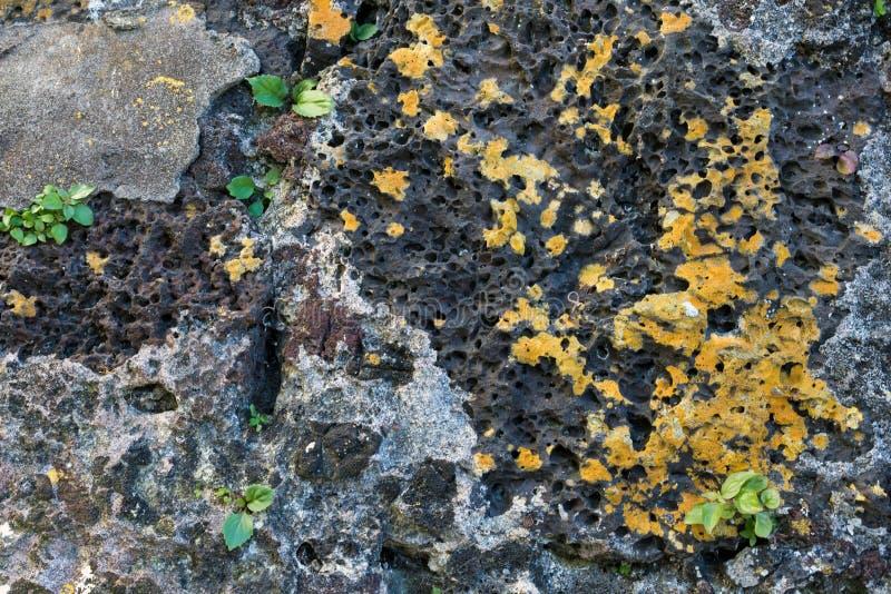 Poreuze vulkanische rots van de Azoren Close-up Textuur Eiland van San Miguel Ponta Delgada, de Azoren, Portugal royalty-vrije stock afbeelding