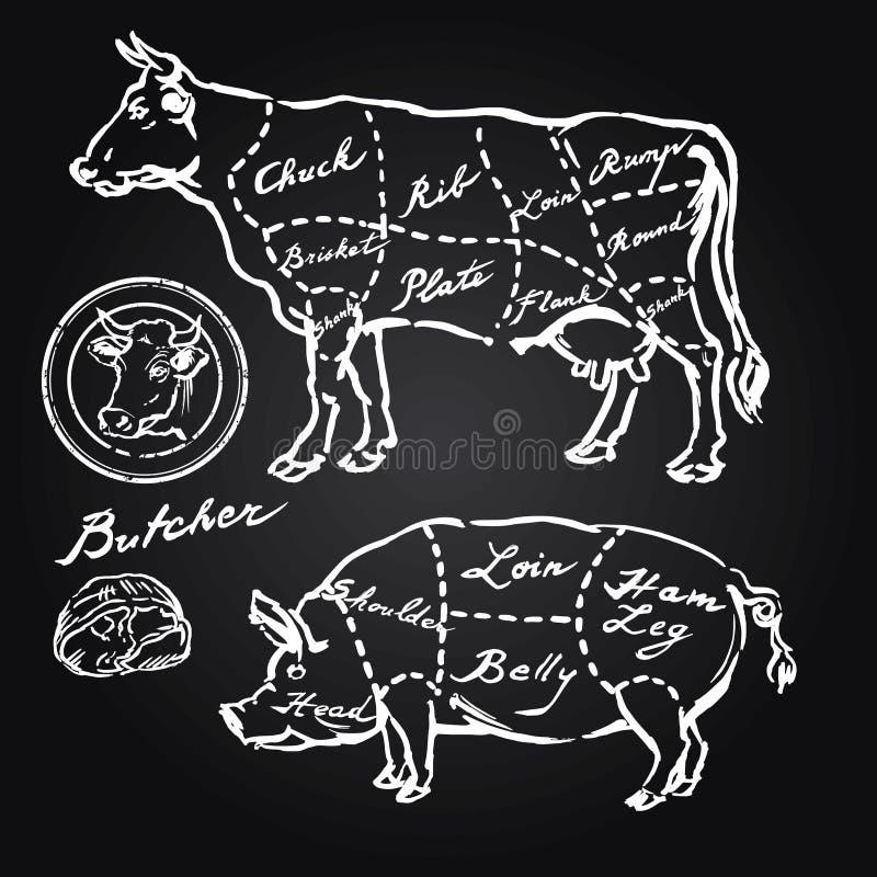 Pork and beef cuts. Hand drawn set stock illustration