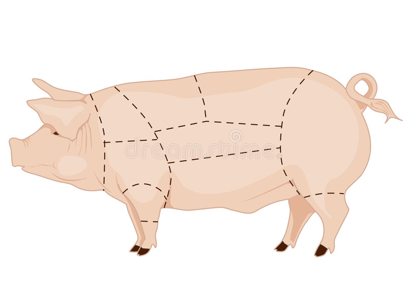 Pork chart. Butchery pork chart, pig meat cuts royalty free illustration