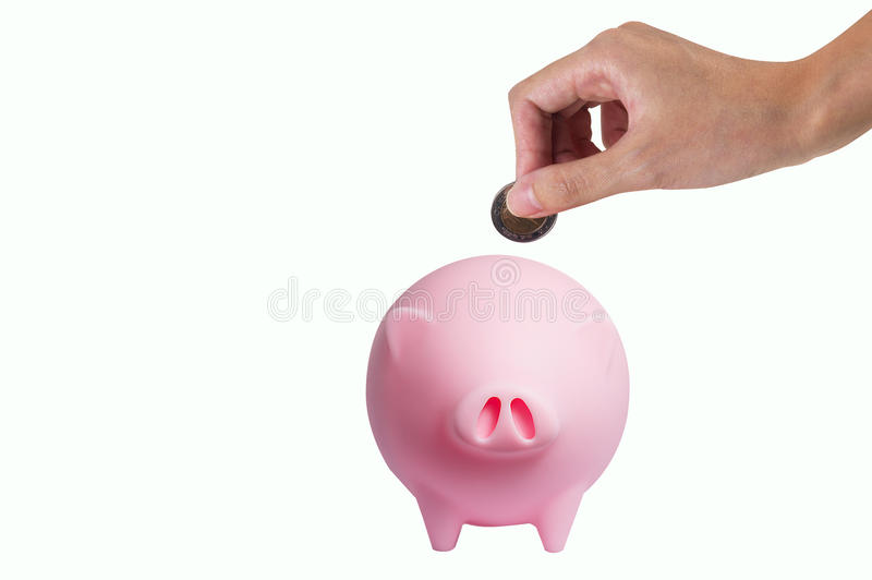 Pork savings. Hand putting coin into the piggy bank one black smiling money pig isolated on white background stock photo