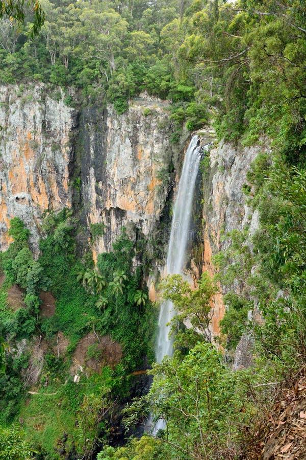 Porla bäcknedgångar i den Springbrook nationalparken, Australien royaltyfri fotografi